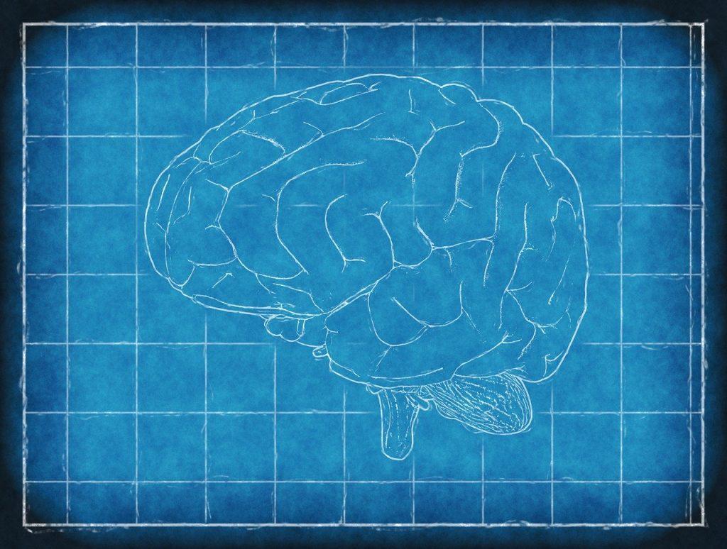brain, blueprint, thinking